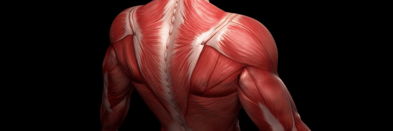 Musculoskeletal & Gut Health | El Paso TX